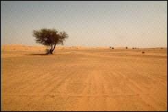 medium_desert_saharien_au_sud_de_Algerie.jpg