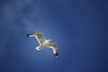 seagull-824829_960_720.jpg
