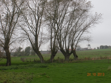 !cid_ii_148ef10fbf1221f3.jpg arbres prairie.jpg