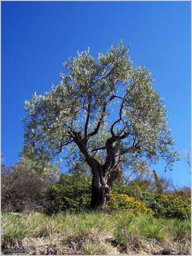 olivier-forcalquier-1-web.jpg