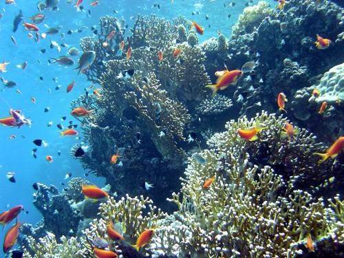 corail-poissons.jpg