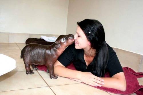 sans-titre.png Harry petit hippo.png