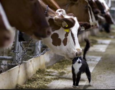 Capture.PNG dans une ferme au Québec.PNG