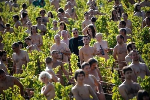 Nus dans le vignoble.jpg