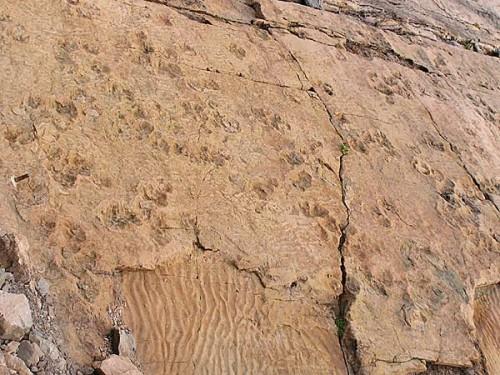 Empreintes de dinosaure sur dalle des grès rose.jpg