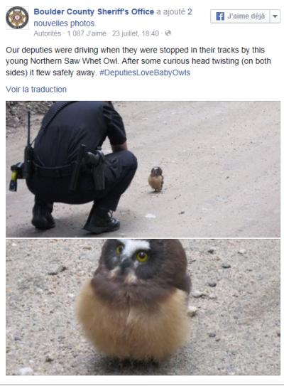 Capture.PNG bébé hibou.PNG