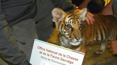 20160618PHOWWW00348.jpg tigre.jpg