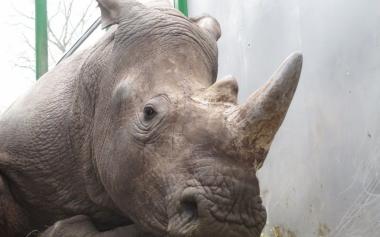 6740556_vince-rhino_1000x625.jpg Rhino lanc.jpg