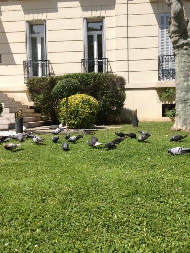 photo.JPG Repas des pigeons 4 05 13.JPG