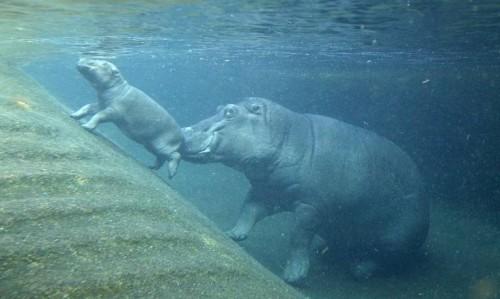 untitled.bmp hippo.jpg