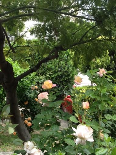 photo.JPG roses 2 XXX.JPG