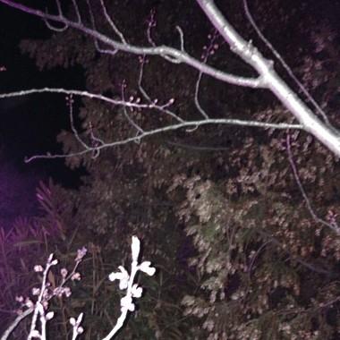 photomagic_image.jpg Le printemps s'éveille dans la nuit.jpg