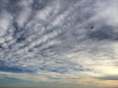 photo 1.JPG 2 nuages et mouettes.JPG