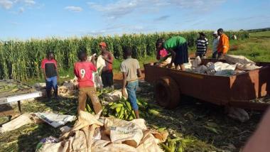 ouvriers_agricoles_zimbabwe-199d9.jpg maïs.jpg
