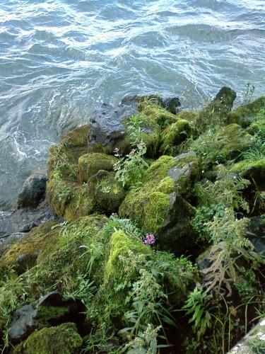 EVIAN Fées du Lac Léman.JPG