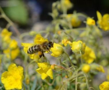 Abeille-500x414.jpg abeille.jpg