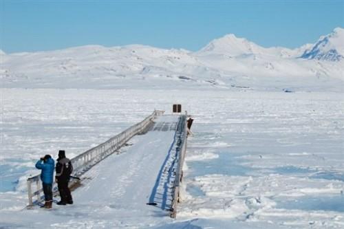Arctique touristes cherchant à voir un ours polaire.jpg