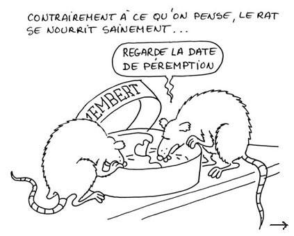 Konk rats camembert.jpg