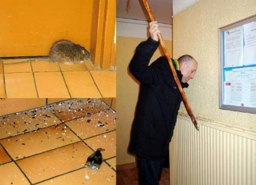 Invasiion de rats.jpg