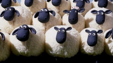 Des-moutons-de-Panurge-qui-suivent-sans-réfléchir.jpg