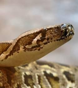 sans-titre.png serpent.png