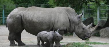 sans-titre.png bébé rhino et sa maman.png