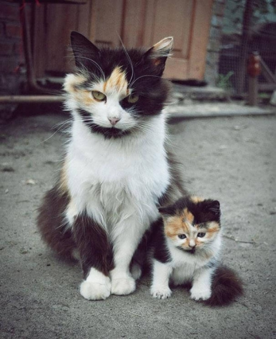 animals-with-miniature-versions-of-themselves-1.jpg chat et son petit.jpg