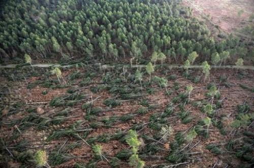 Tempête arbres déracinés près de labouheyre Landes.jpg