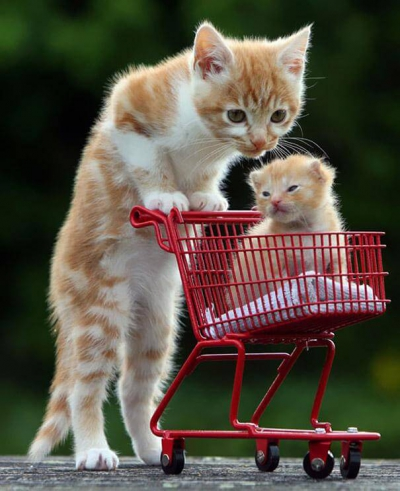 animals-with-miniature-versions-of-themselves-44.jpg chats caddie.jpg