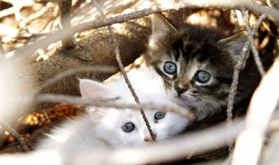 two-stray-kittens-huddle-together-b667-diaporama.jpg