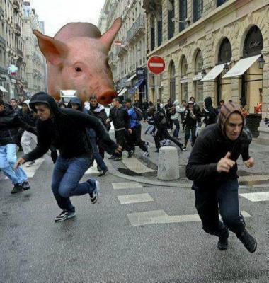 sans-titre.png cochon.png