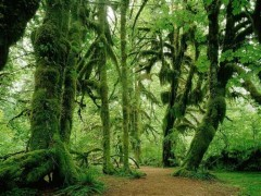 foret-tropicale.jpg