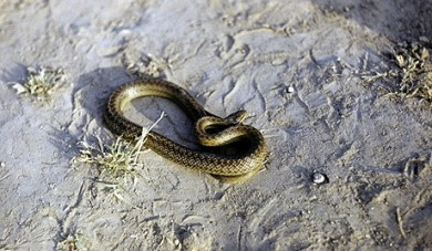 zmei_jpg_1000x297x1.jpg serpents.jpg