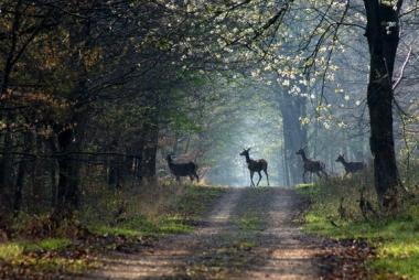 la-vie-en-forêt-brocéliande-en-bretagne-sud-le-gite-brocéliande-à-moins-de-100-mètres.jpg