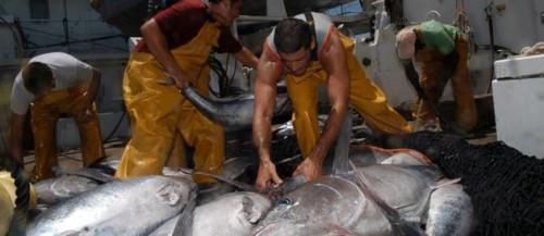 Pêcheurs français mis en examen -thon rouge.jpg